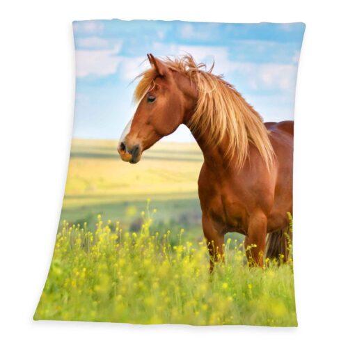 Produktbild Fleece Decke Pferd grün braun Fleece Decke Vorderseite