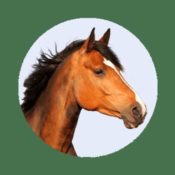 Zum Pferde Fanshop